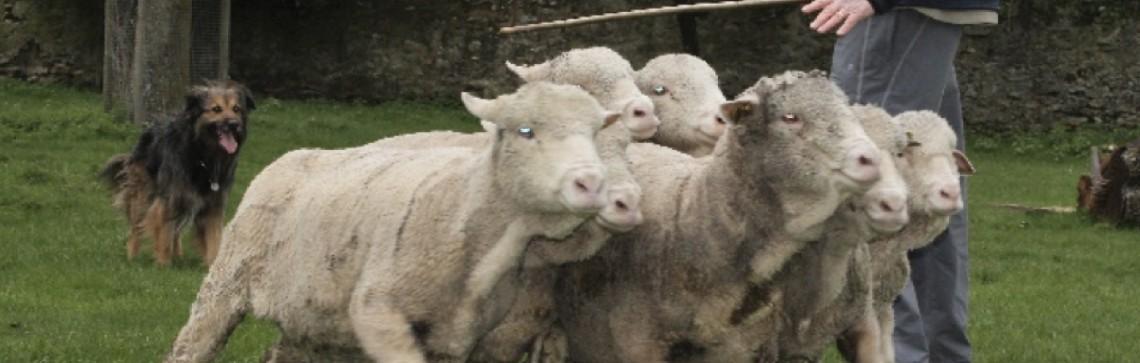 Fête de la tonte et de la laine, Bergerie Nationale Rambouillet